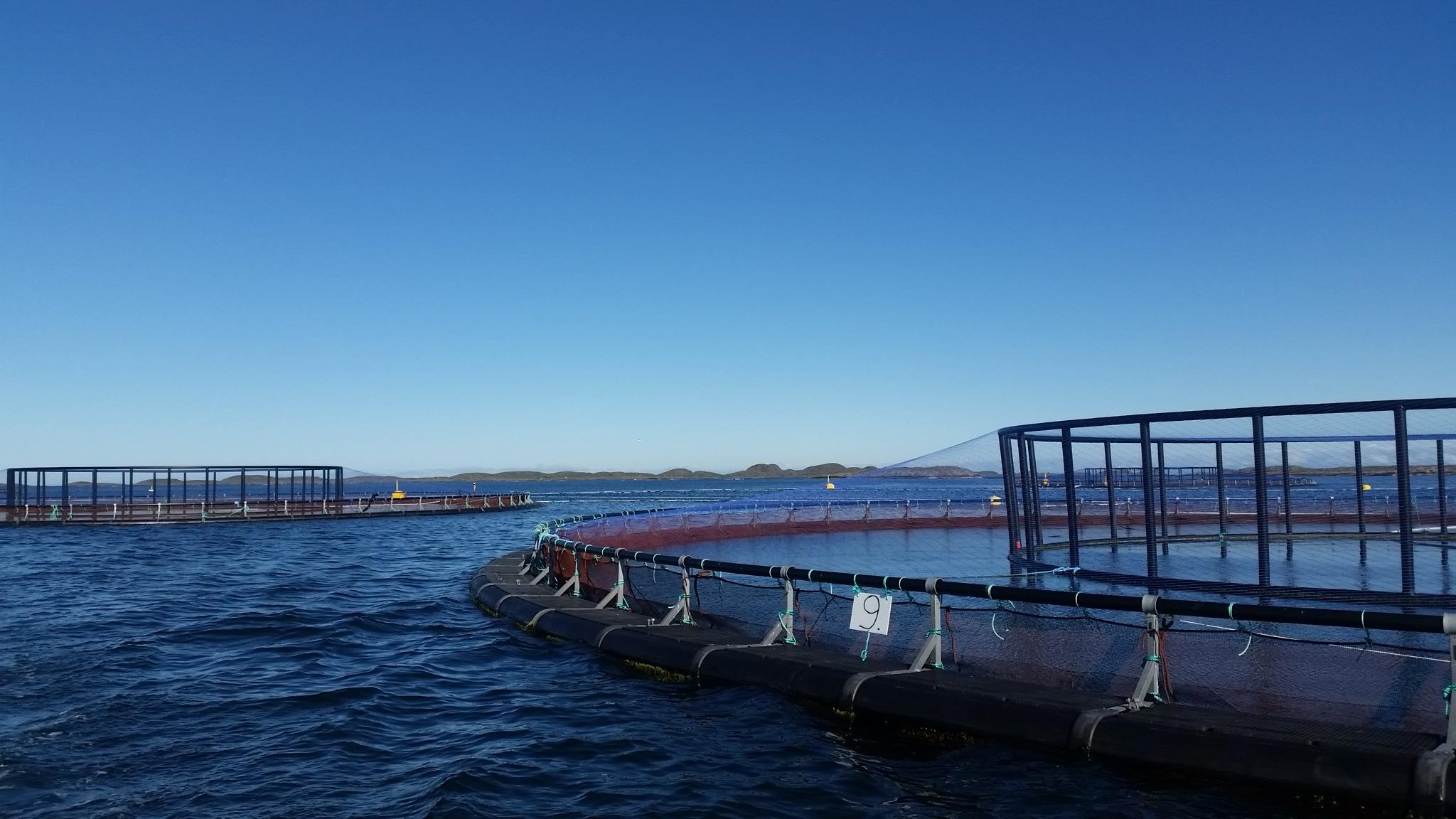 Aquaculture|MrGoodfish