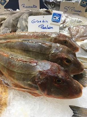 Grondin Perlon Chelidonichthys lucerna poisson de saison Mr.Goodfish